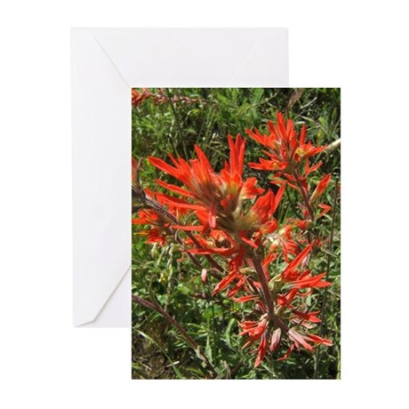 Indian Paintbrush Flower Greeting Cards (Pk of 10)