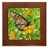Monarch Framed Tile