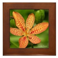 Blackberry Lily Framed Tile