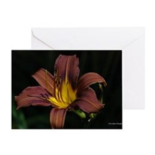 Chocolate Lilly Blank Greeting Card
