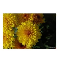 Yellow Mum Postcards (Package of 8)