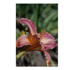Mauve Lilly Postcards (Package of 8)