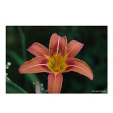 Orange Lilly Postcards (Package of 8)