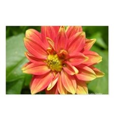 Dahlia Postcards (Package of 8)