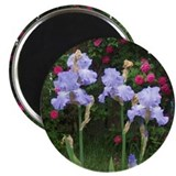 Iris Dreams Magnet