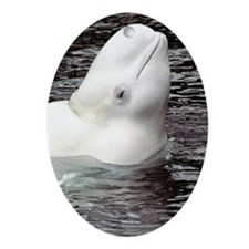 Beluga Head Oval Ornament
