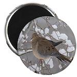 Winter Dove 2.25