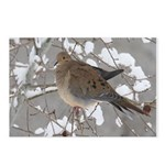 Winter Dove Postcards (Package of 8)