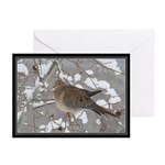 Winter Dove Greeting Cards (Pk of 20)