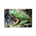 Pacific Chorus Frog Treefrog Rectangle Magnet (10