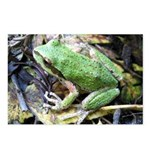 Pacific Chorus Frog Treefrog Postcards (Package of