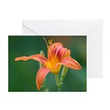 Orange Daylily Notecard(Pk of 10)