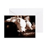 Staffordshire Bull Terrier Grtg Cards (Pk of 10)