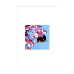 Bee dangling from Judas-tree flowers Mini Poster P
