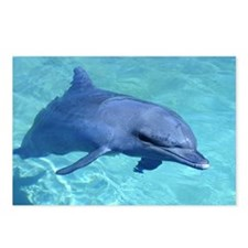 Serenity Dolphin Postcards (Package of 8)