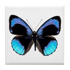 Blue Eunica Butterfly Tile Coaster