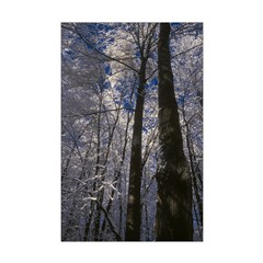 Tall Trees Posters