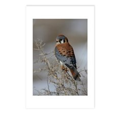 Kestrel Postcards (Package of 8)