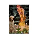 Fairies/ Italian Spinone Rectangle Magnet (100 pac