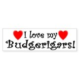 I Love my Budgerigars Bumper Bumper Sticker