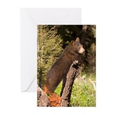 Black Bear Cub Greeting Cards (Pk of 10)