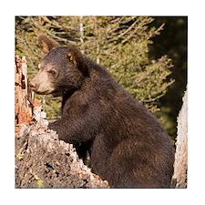 Black Bear Cub Tile Coaster