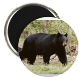 "black bear 2.25"" Magnet (100 pack)"