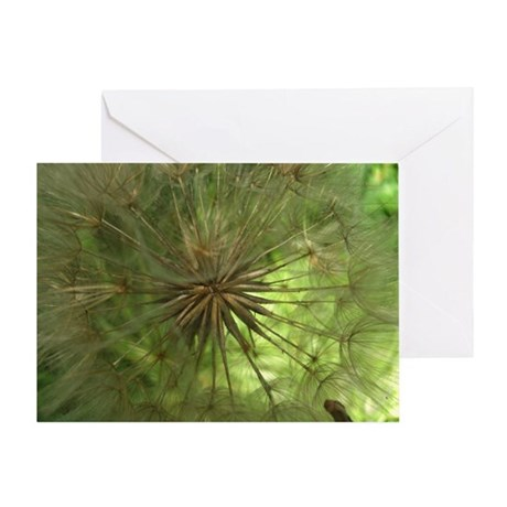 Seed Pod Greeting Card