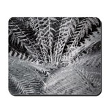 Silver Fern in the Otways Mousepad