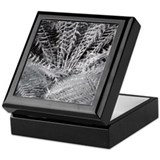 Silver Fern in the Otways Keepsake Box