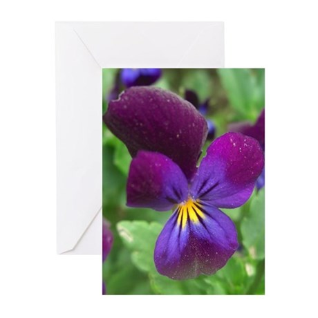 Pansy Greeting Cards (Pk of 20)