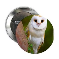 "Cute Barn owl 2.25"" Button (10 pack)"
