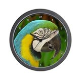Cool Blue macaw Wall Clock
