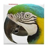 Funny Blue macaw Tile Coaster