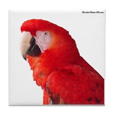 Cool Macaw Tile Coaster