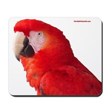 Cute Macaw Mousepad