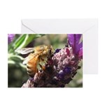Bee on Flower Greeting Cards (Pk of 20)