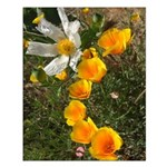 Poppies and White Flower Small Poster