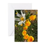 Poppies and White Flower Greeting Cards (Pk of 10)