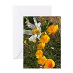 Poppies and White Flower Greeting Card