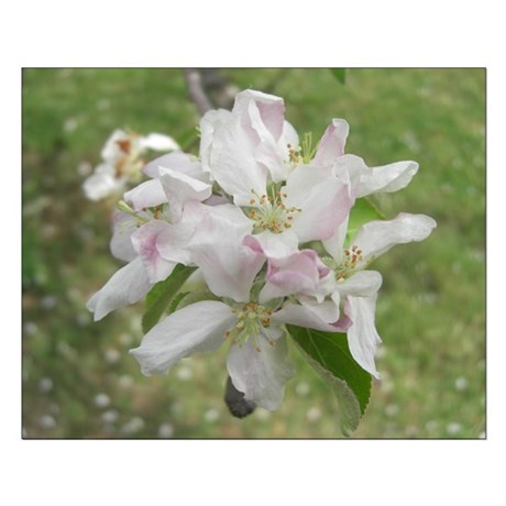 Apple Blossoms Small Poster