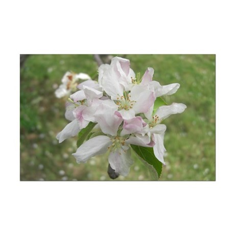 Apple Blossoms Mini Poster Print