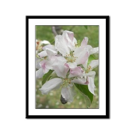 Apple Blossoms Framed Panel Print