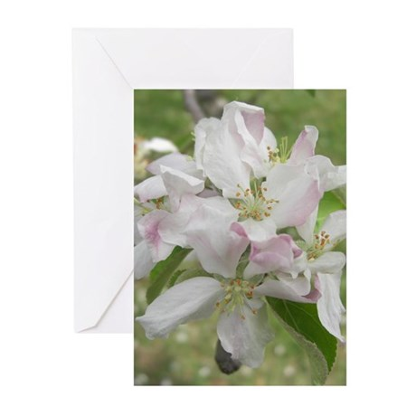 Apple Blossoms Greeting Cards (Pk of 20)
