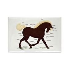 Rocky Mountain Horse Anatomy Rectangle Magnet