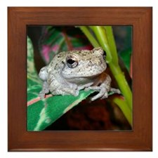 Grey treefrog 1 Framed Tile