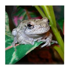 grey treefrog 1 Tile Coaster