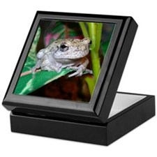 Grey treefrog 1 Keepsake Box