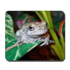 Grey treefrog 1 Mousepad