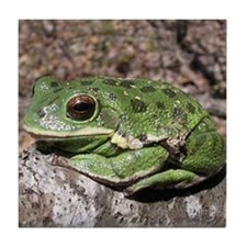 Barking treefrog Tile Coaster